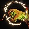 Цирки в Ильинском-Хованском